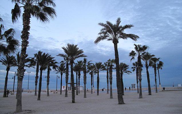 Playas con palmeras